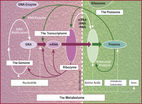 Lysine - an overview | ScienceDirect Topics