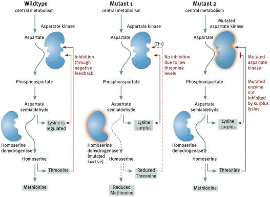 Lysine - an overview | ScienceDirect Topics