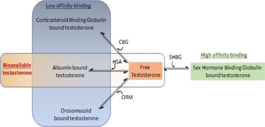How to lower sex hormone binding globulin