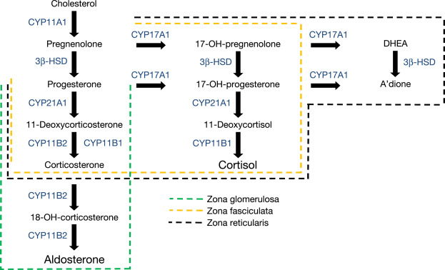 Aldosterone - an overview   ScienceDirect Topics