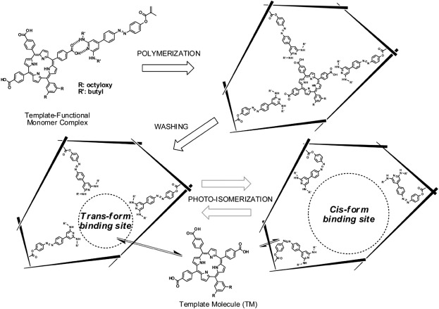 The Recognizing Mechanism And Selectivity Of The Molecularly