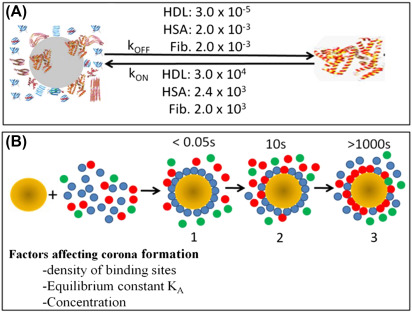 Protein Corona - an overview | ScienceDirect Topics
