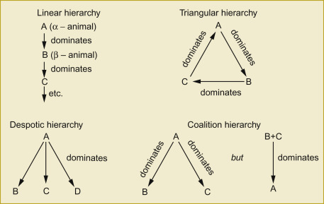 Dominance Hierarchy - an overview | ScienceDirect Topics