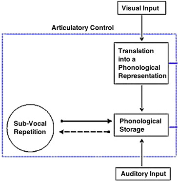 Research Working Memory Is Key To Early >> Verbal Working Memory An Overview Sciencedirect Topics