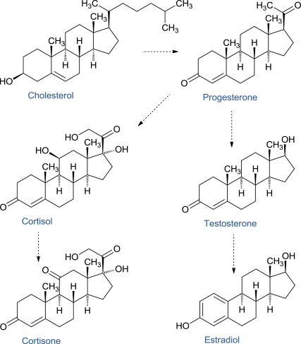 Steroid - an overview | ScienceDirect Topics