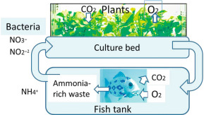 Aquaponics - an overview | ScienceDirect Topics