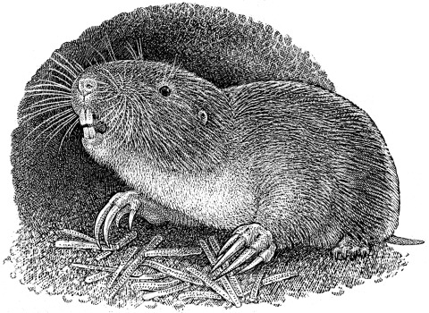 Gopher - an overview | ScienceDirect Topics