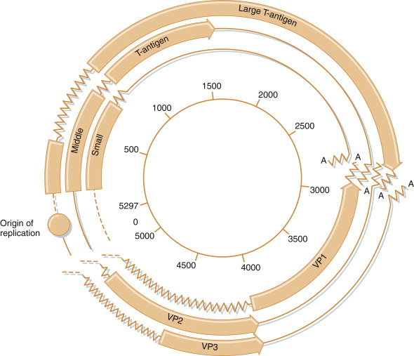 M13 Bacteriophage - an overview | ScienceDirect Topics