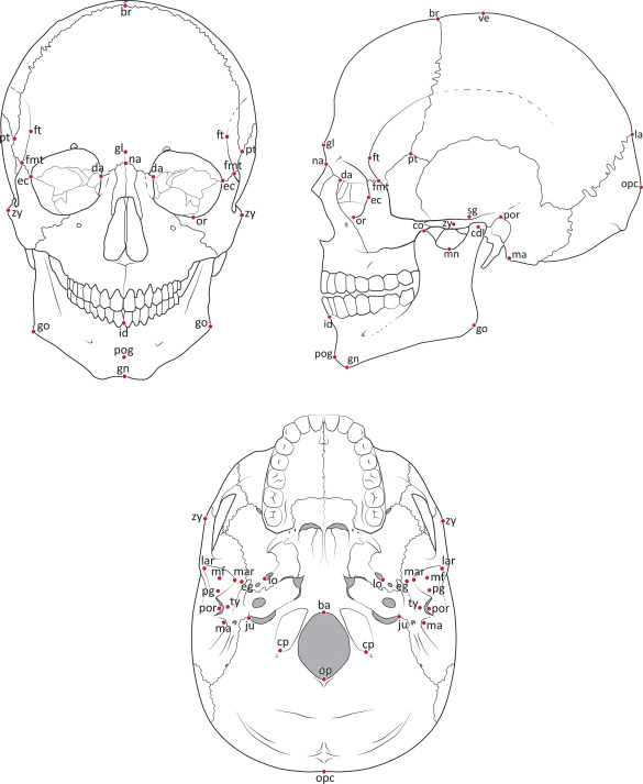 Midsagittal Skull Bone Diagram