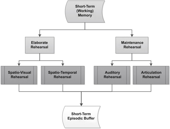 Short Term Memory An Overview ScienceDirect Topics