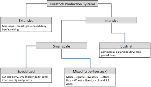 Research on Livestock, Livelihoods, and Innovation