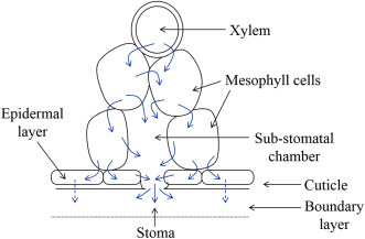 Plant Anatomy and Physiology - ScienceDirect