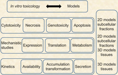 Alternative In Vitro Models for Safety and Toxicity