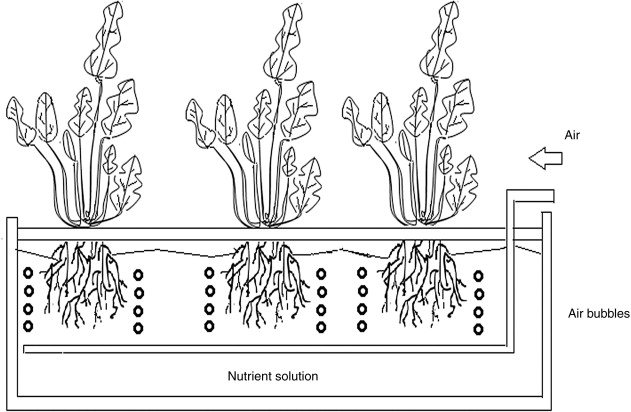 Plant Tissue Culture - an overview   ScienceDirect Topics