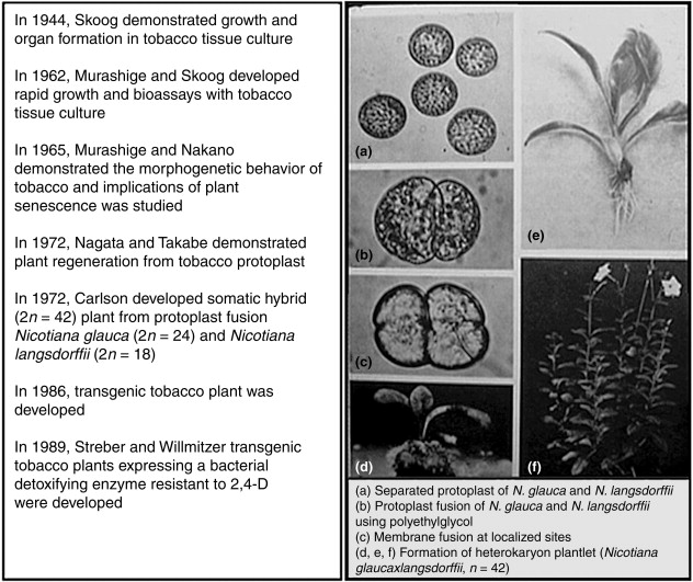 Plant Tissue Culture - an overview | ScienceDirect Topics