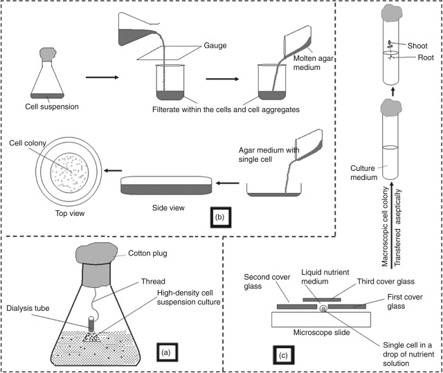 Suspension Cell Culture - an overview | ScienceDirect Topics