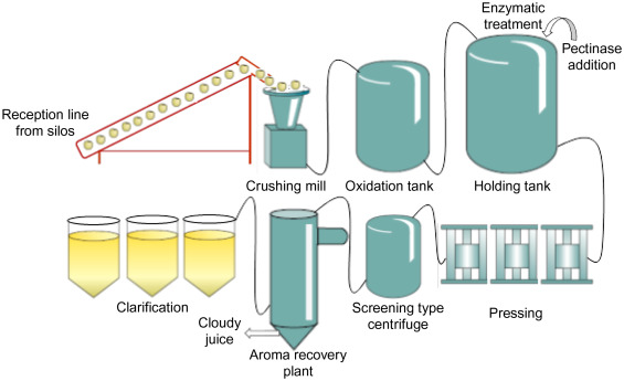 Enzyme-Assisted Extraction of Fruit Juices - ScienceDirect