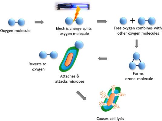 Ozone for Fruit Juice Preservation - ScienceDirect