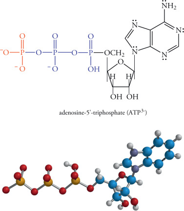 Phosphoric Acid - an overview   ScienceDirect Topics