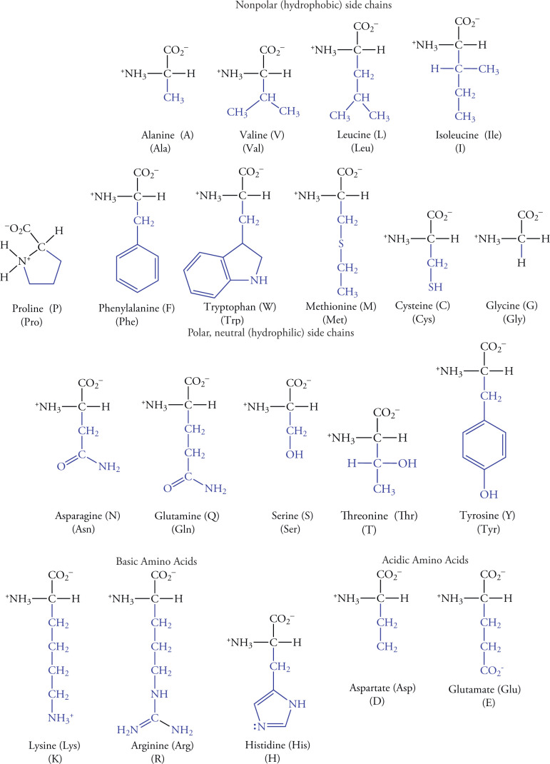 20 Amino Acid One Letter Code.Amino Acids An Overview Sciencedirect Topics