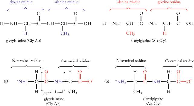 Nonpolar Amino Acid An Overview Sciencedirect Topics