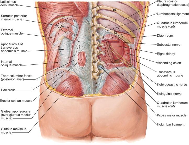 Lumbar Nerves - an overview | ScienceDirect Topics