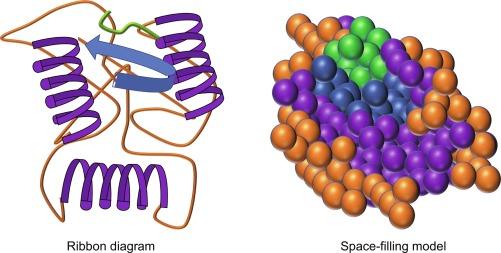 Globular Protein - an overview   ScienceDirect Topics