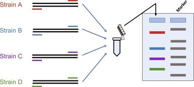 multiplex papilloma adalah