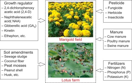Potential Of Ornamental Plants For Phytoremediation Of Heavy Metals And Income Generation Sciencedirect