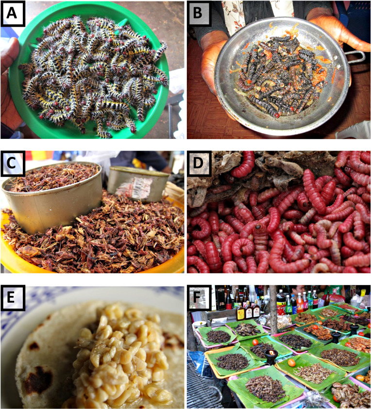 Insects as Food: History, Culture, and Modern Use around the
