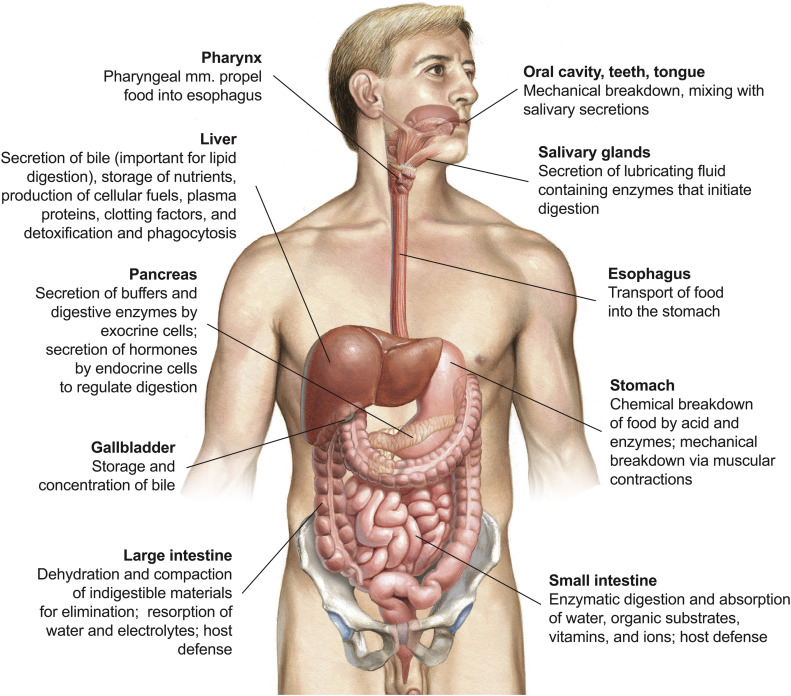 Upper Gastrointestinal Tract Sciencedirect
