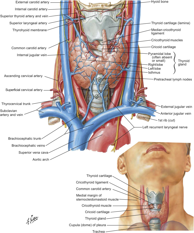 Inferior Thyroid Veins An Overview Sciencedirect Topics