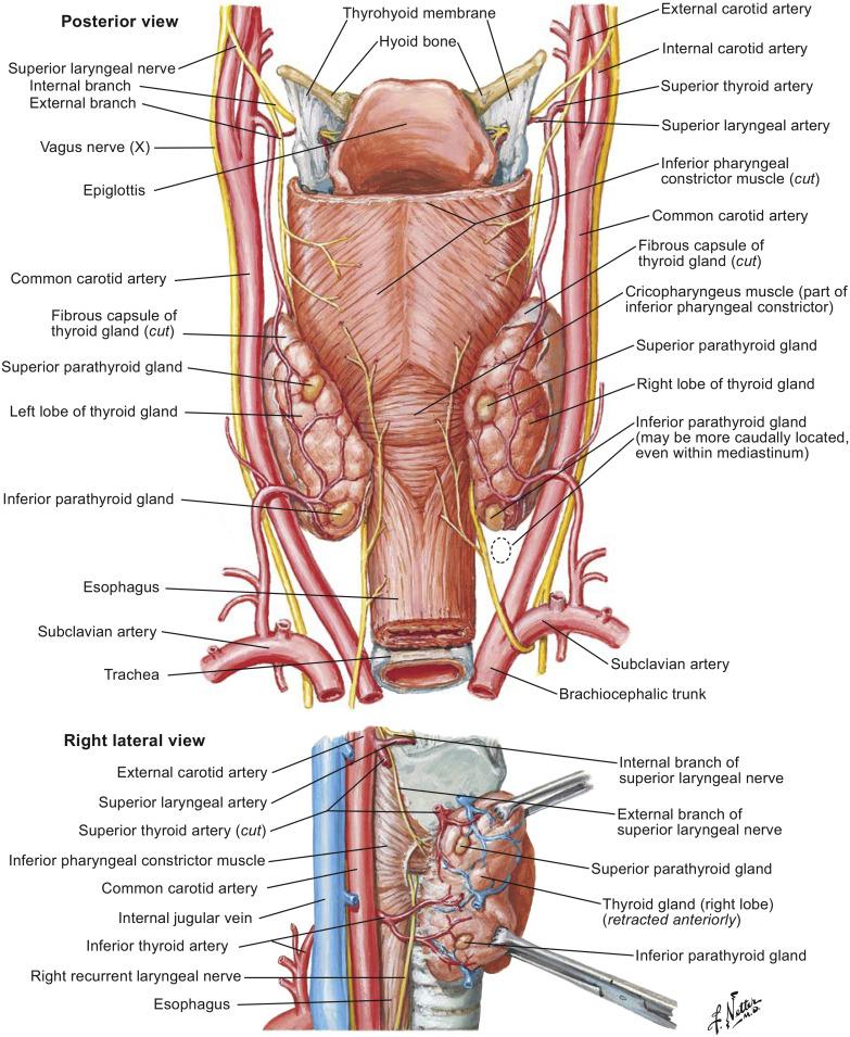 Endocrine System Sciencedirect