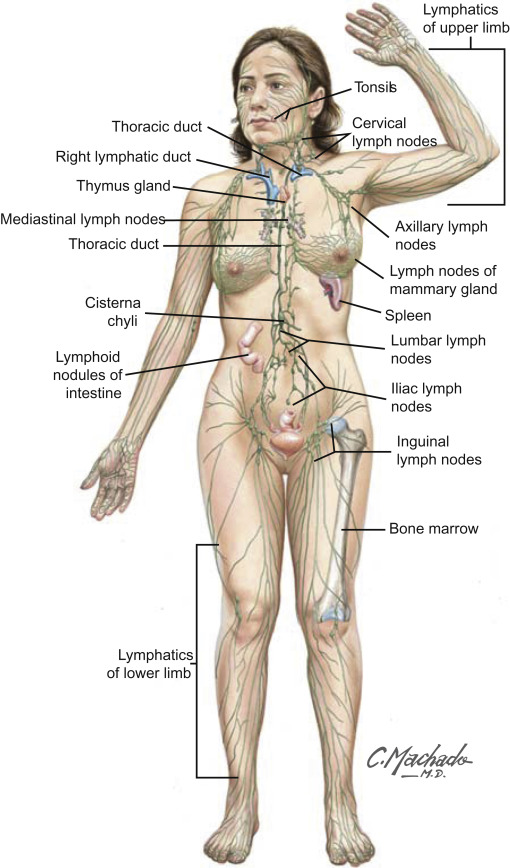 Lymph An Overview Sciencedirect Topics