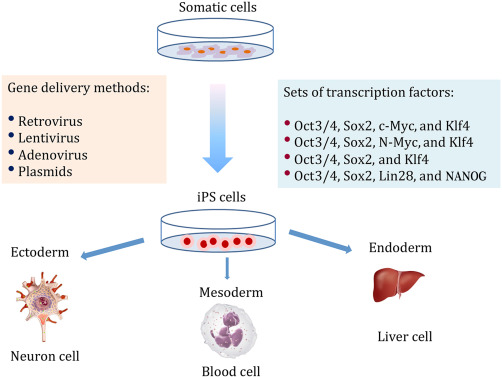 Stem Cell Epigenetics in Medical Therapy - ScienceDirect