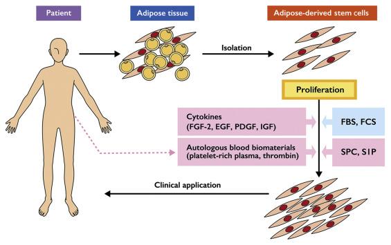 Adipose-Derived Stem Cells in Regenerative Medicine - ScienceDirect