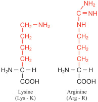 Lysine - an overview   ScienceDirect Topics