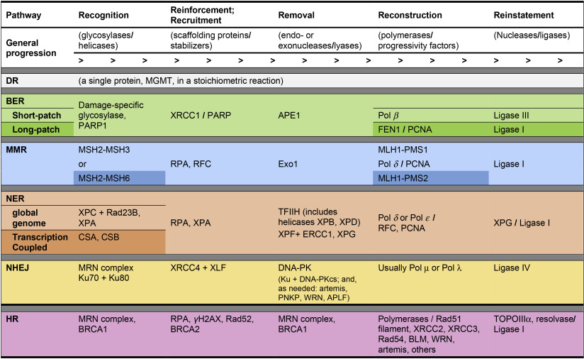 Overview of DNA repair pathways, current targets, and clinical