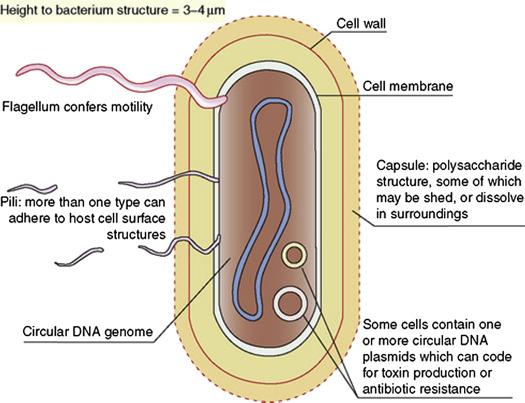 bacterium - an overview | Scie...