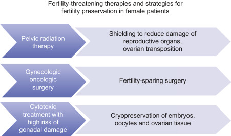 Fertility And Cancer Fertility Preservation And Fertility Sparing Surgery Sciencedirect