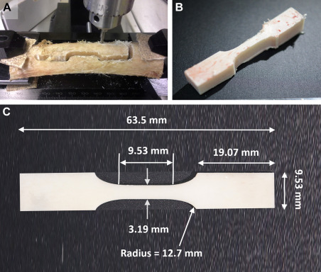Tension and Compression Testing of Cortical Bone - ScienceDirect