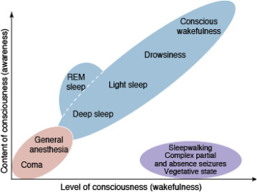 Wakefulness - an overview | ScienceDirect Topics