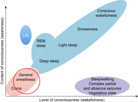 Unconsciousness - an overview | ScienceDirect Topics