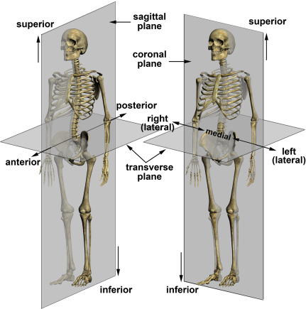 body planes and directional terms