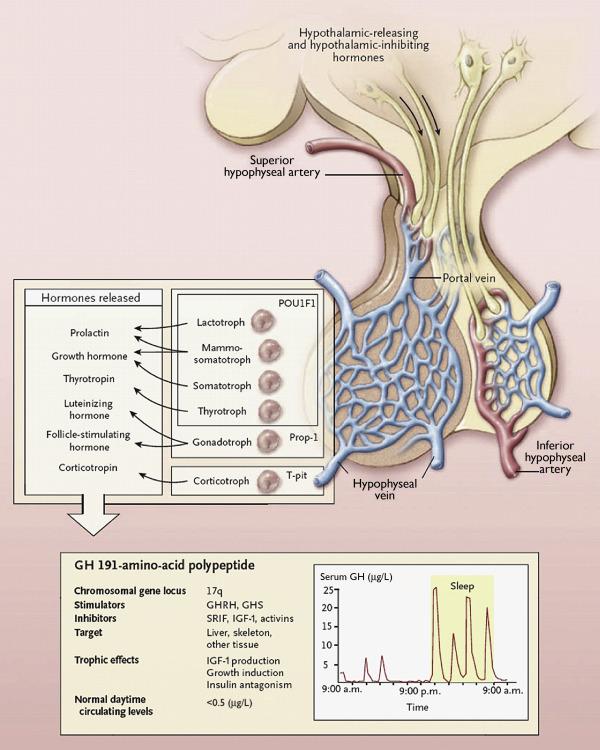 Growth Hormone - ScienceDirect