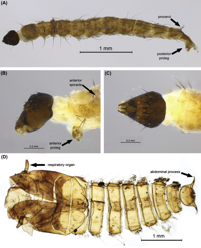 Larva - an overview | ScienceDirect Topics