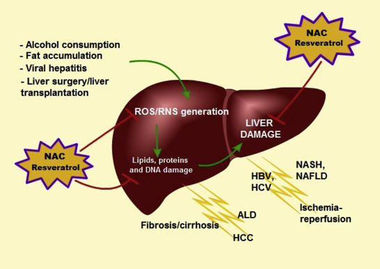 Armoured Vehicles Latin America ⁓ These Nac Infusion Liver Failure