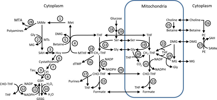 Sarcosine - an overview | ScienceDirect Topics