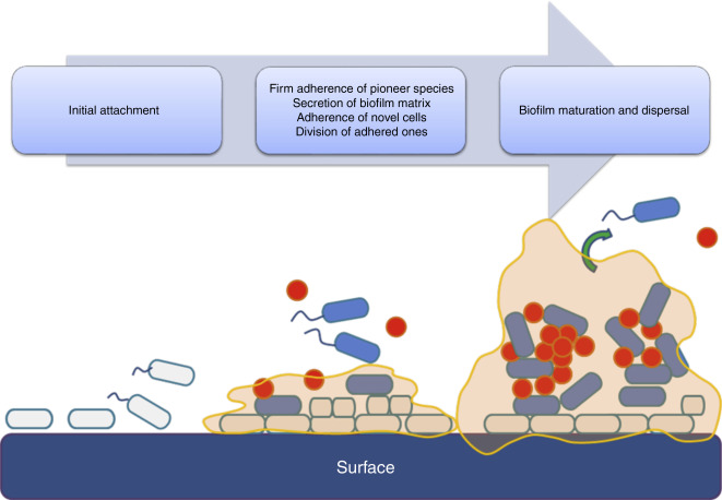 Microbial biofilms from the aquatic ecosystems and water