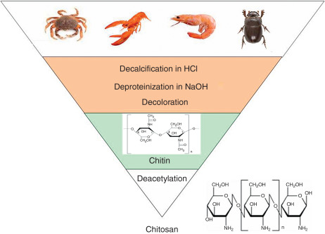 Applications of chitosan as a functional food - ScienceDirect